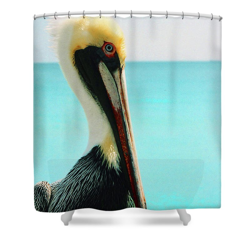 Shower Curtain featuring the photograph Pelican Profile And Water by Heather Kirk