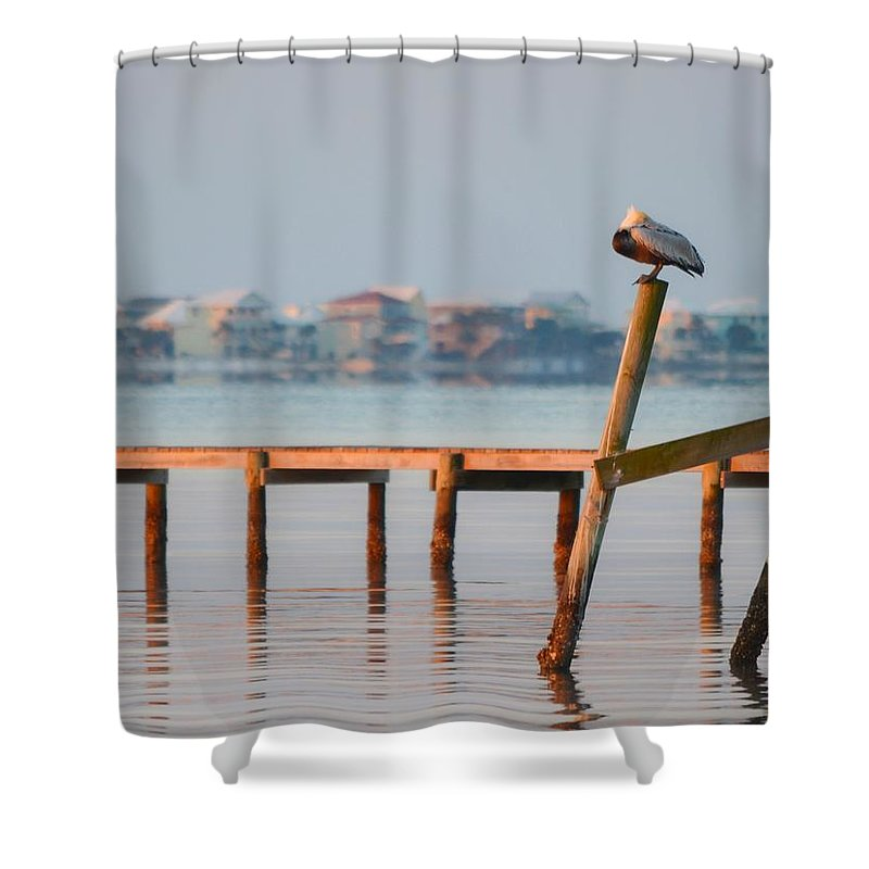 Pelican Shower Curtain featuring the photograph Pelican Sleeping On Sound At Angle by Jeff at JSJ Photography