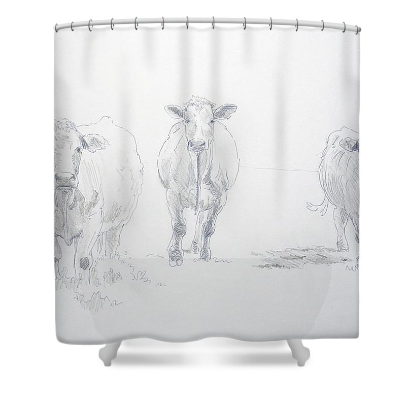Cows Shower Curtain featuring the drawing Pencil Drawing Of Three Cows by Mike Jory