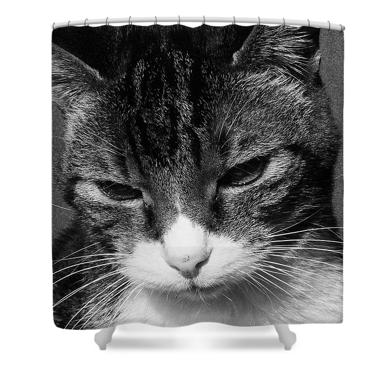 Cat Shower Curtain featuring the photograph Pensive by Morgan Veissiere
