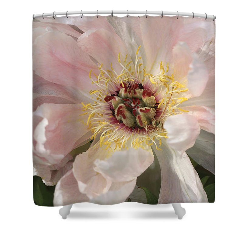 Flower Shower Curtain featuring the photograph Peonie In Soft Pink by Deborah Benoit
