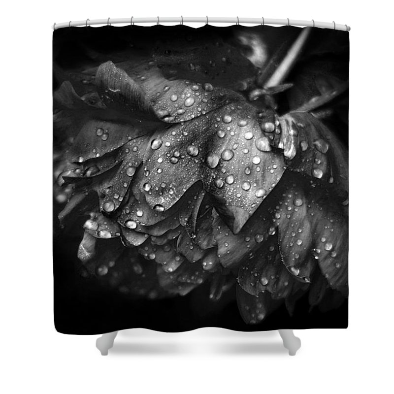 Peony Shower Curtain featuring the photograph Refreshed by Jessica Jenney