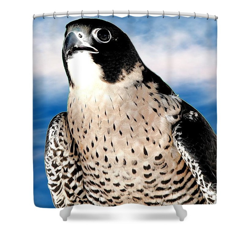 Peregrine Falcon Shower Curtain featuring the photograph Peregrine Falcon by Rose Santuci-Sofranko