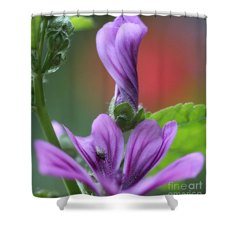 Flowers Shower Curtain featuring the photograph Perfect Rolled by Four Hands Art