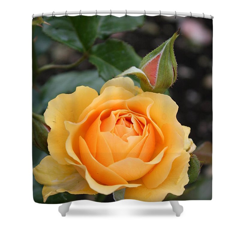 Rose Shower Curtain featuring the photograph Perfect Rose by Christiane Schulze Art And Photography