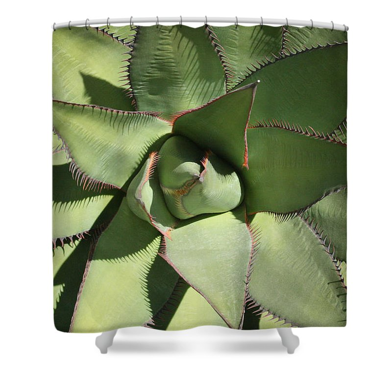 Perfect Symmetry Shower Curtain featuring the photograph Perfect Symmetry by Ellen Henneke