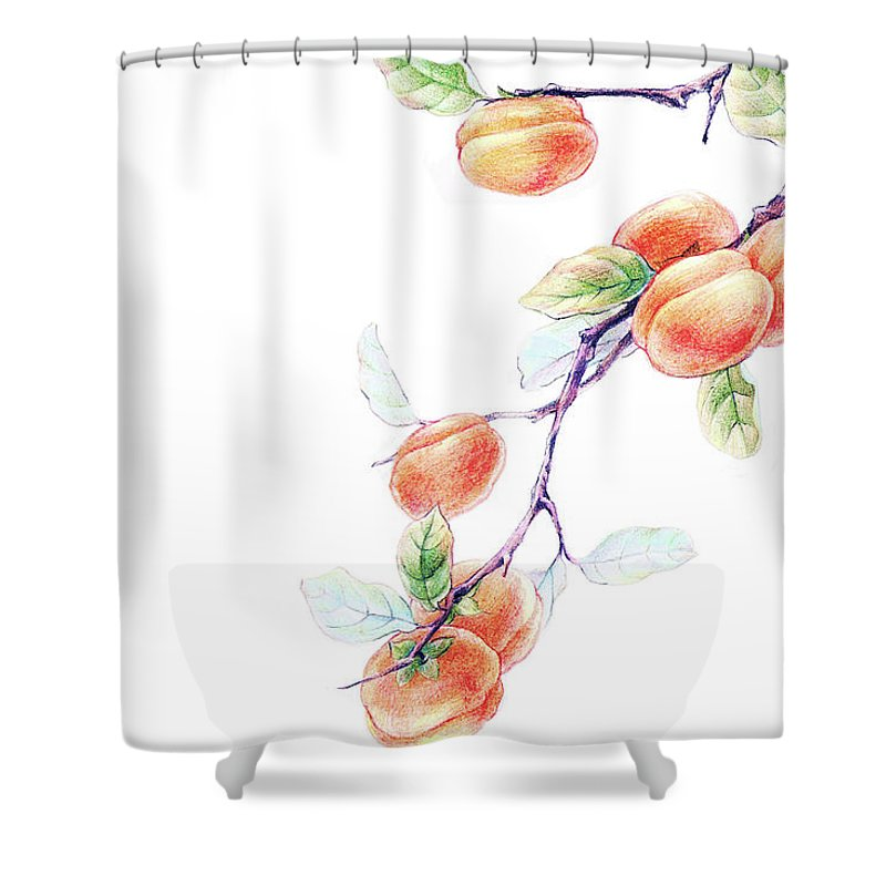 White Background Shower Curtain featuring the digital art Persimmon Tree by Bji / Blue Jean Images