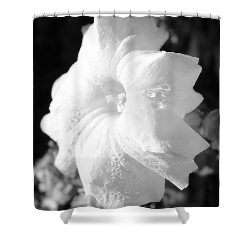 Floral Shower Curtain featuring the photograph Petunia After Rain by Kume Bryant