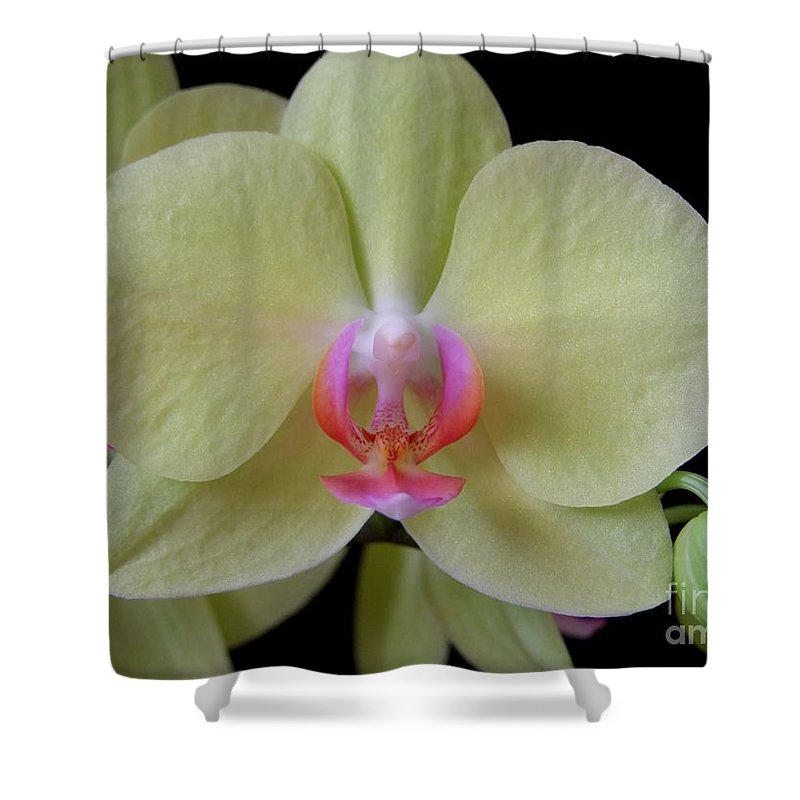 Orchid Shower Curtain featuring the photograph Phalaenopsis Fuller's Sunset Orchid No 2 by Mary Deal