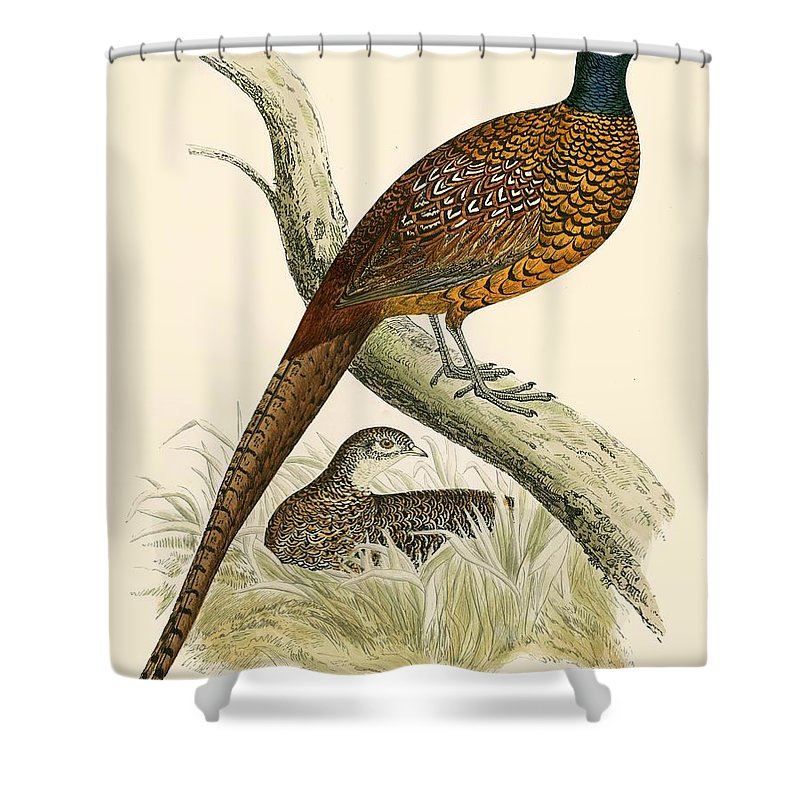 Pheasant Shower Curtains