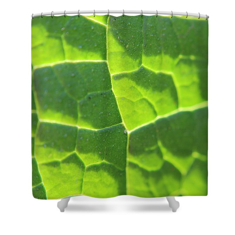 Leaf Shower Curtain featuring the photograph Photosynthesis by Robert Phelan