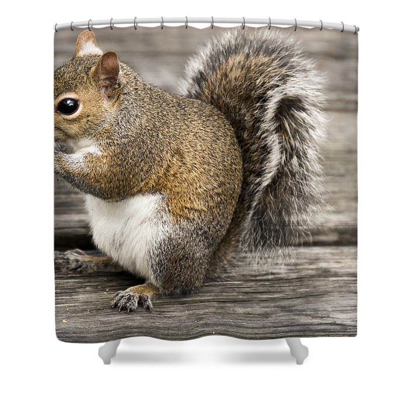 Alertness Shower Curtain featuring the photograph Picnics Are Fun by Penny Lisowski