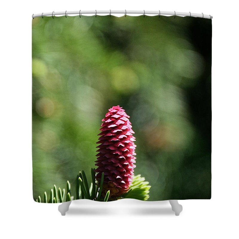 Tree Shower Curtain featuring the photograph Pine Candle by Susan Herber