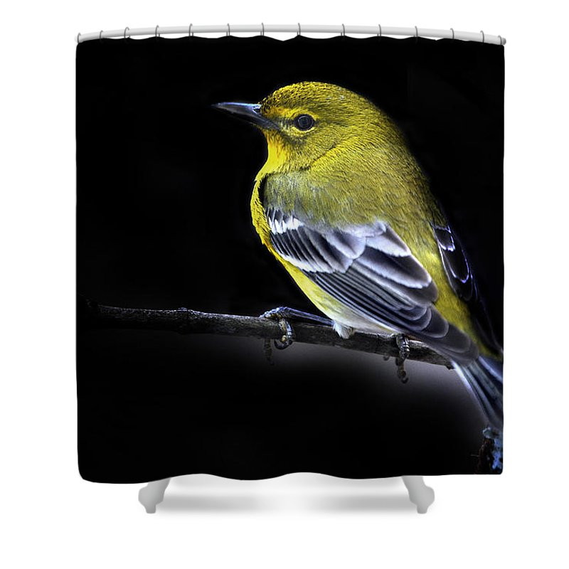 Names Of Birds Shower Curtain featuring the photograph Pine Warbler by Skip Willits