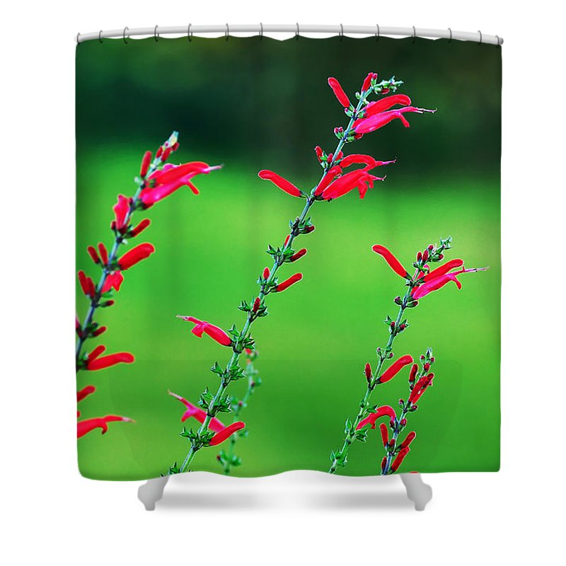 Photography Shower Curtain featuring the photograph Pineapple Sage by Kaye Menner