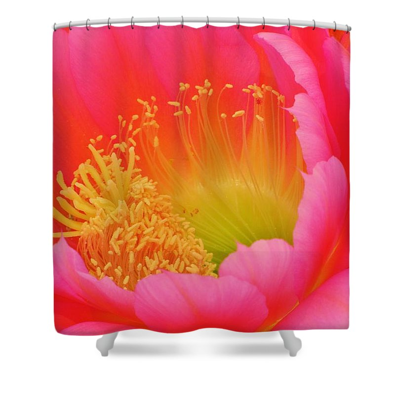 Cactus Flower Shower Curtain featuring the photograph Pink And Yellow Cactus Flower by Michelle Cassella