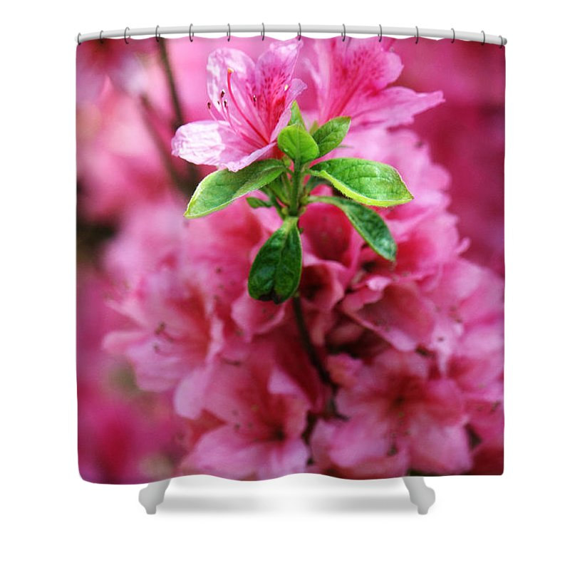 Pink Azaleas Closeup Shower Curtain featuring the photograph Pink Azaleas by Nishanth Gopinathan