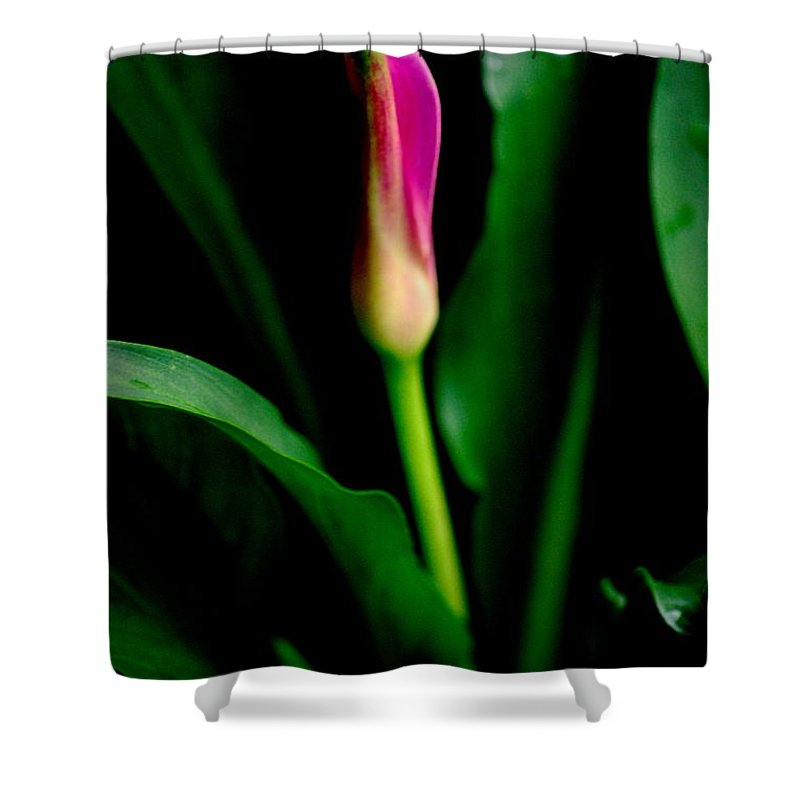 Calla Shower Curtain featuring the photograph Pink Calla Lily Blossom by Kathy Sampson