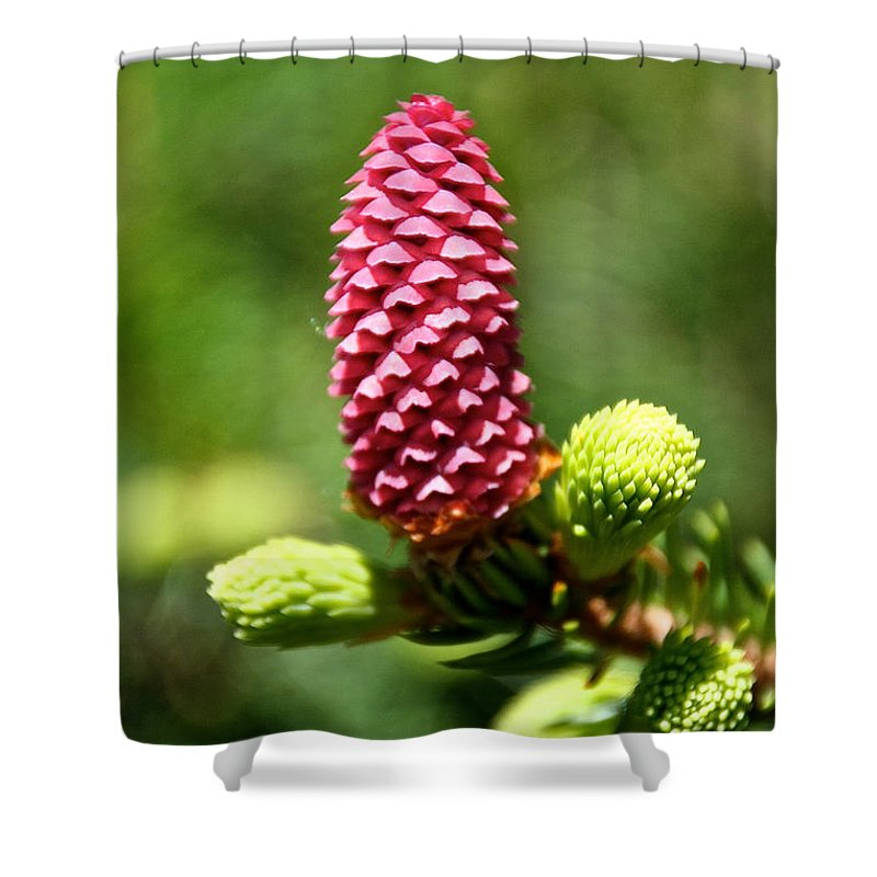 Tree Shower Curtain featuring the photograph Pink Cone by Susan Herber