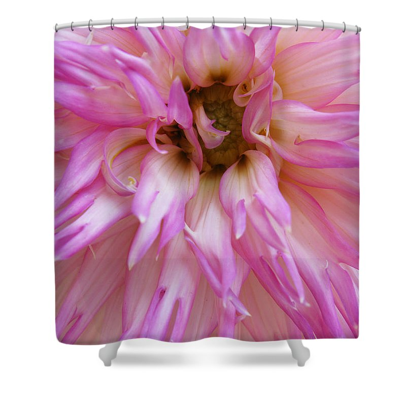 Dahlia Shower Curtain featuring the photograph Pink Dahlia by Lisa Foster