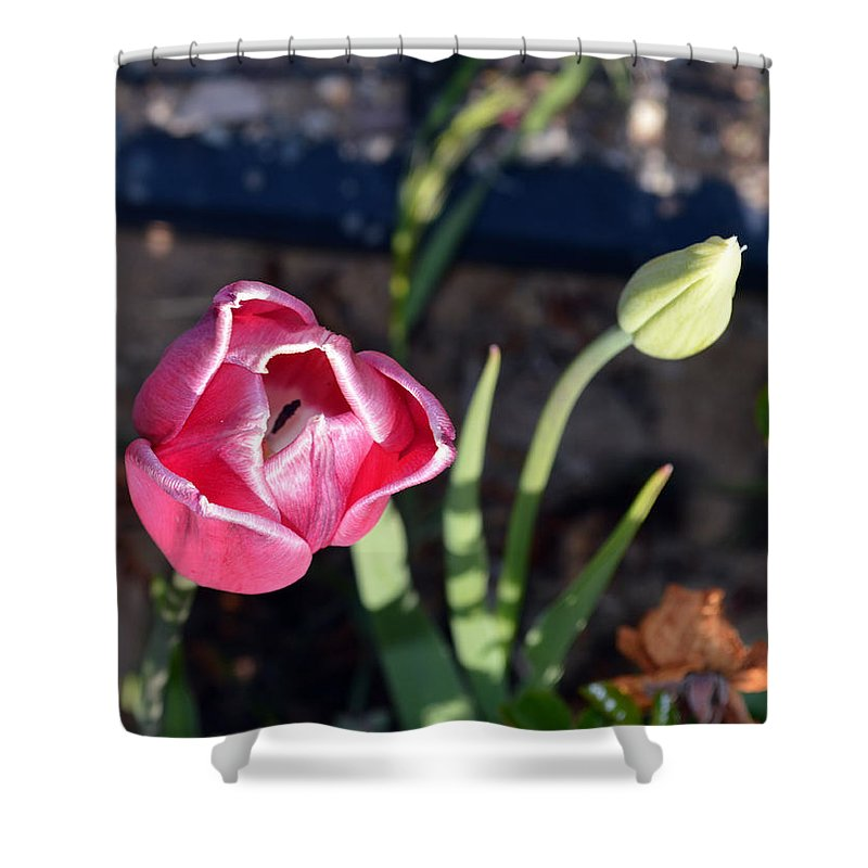 Flower Shower Curtain featuring the photograph Pink Flower And Bud by Brent Dolliver