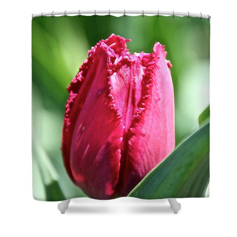 Flower Shower Curtain featuring the photograph Pink Fringed by Susan Herber