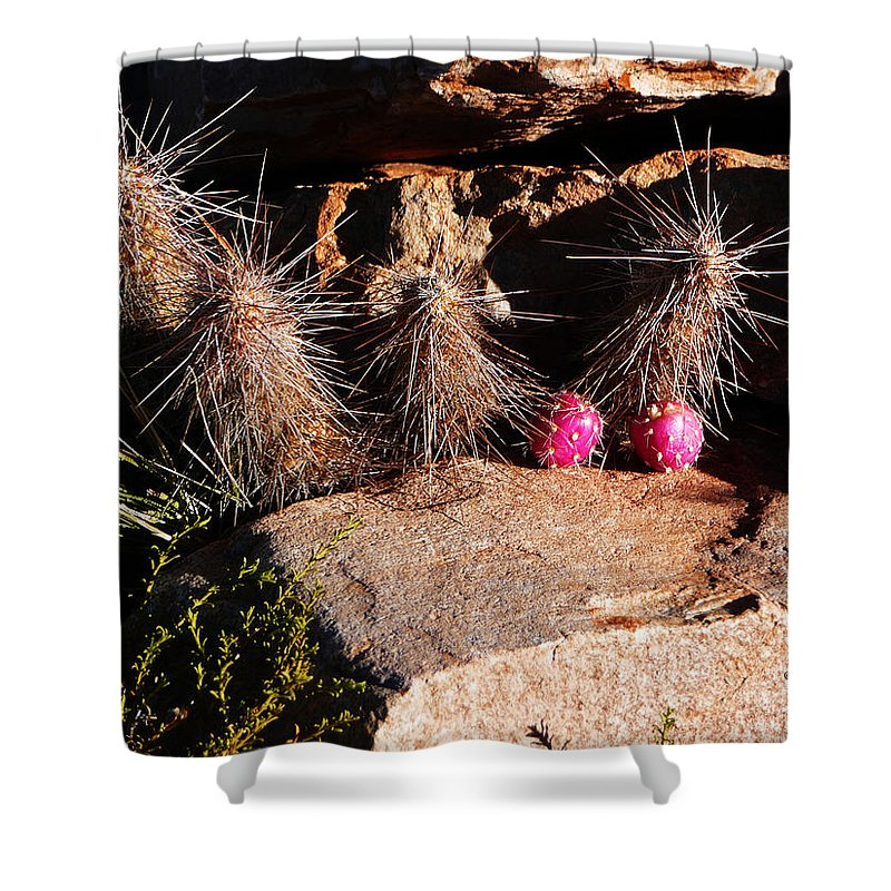 Prickly Shower Curtain featuring the photograph Pink Lady Cactus by Xueling Zou