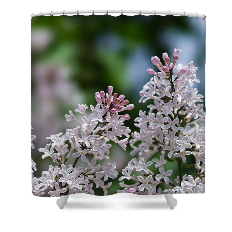 Background Shower Curtain featuring the photograph Pink Lilacs - Featured 2 by Alexander Senin