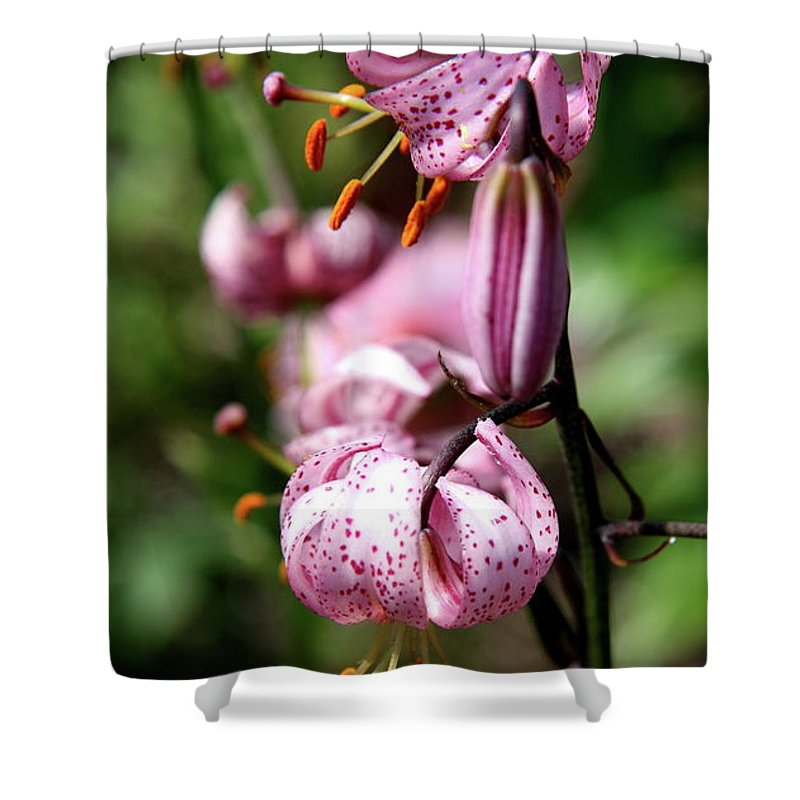 Pink Lilies Shower Curtain featuring the photograph Pink Lilies by Christiane Schulze Art And Photography