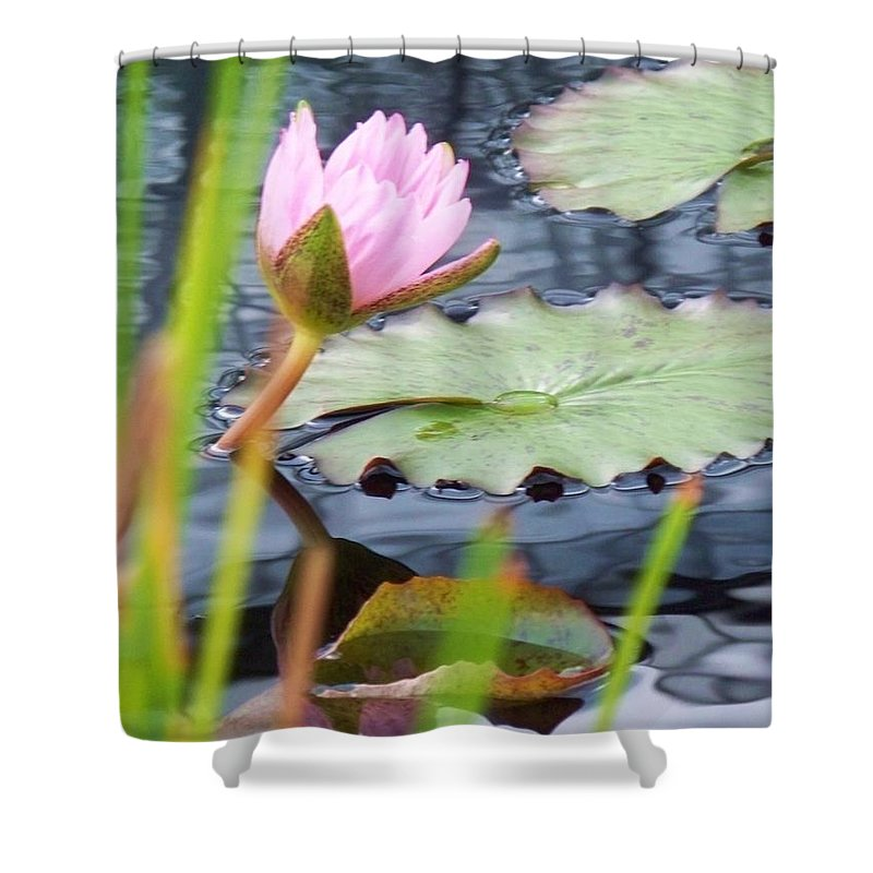 Photograph Shower Curtain featuring the photograph Pink Lily And Pads by Eric Schiabor