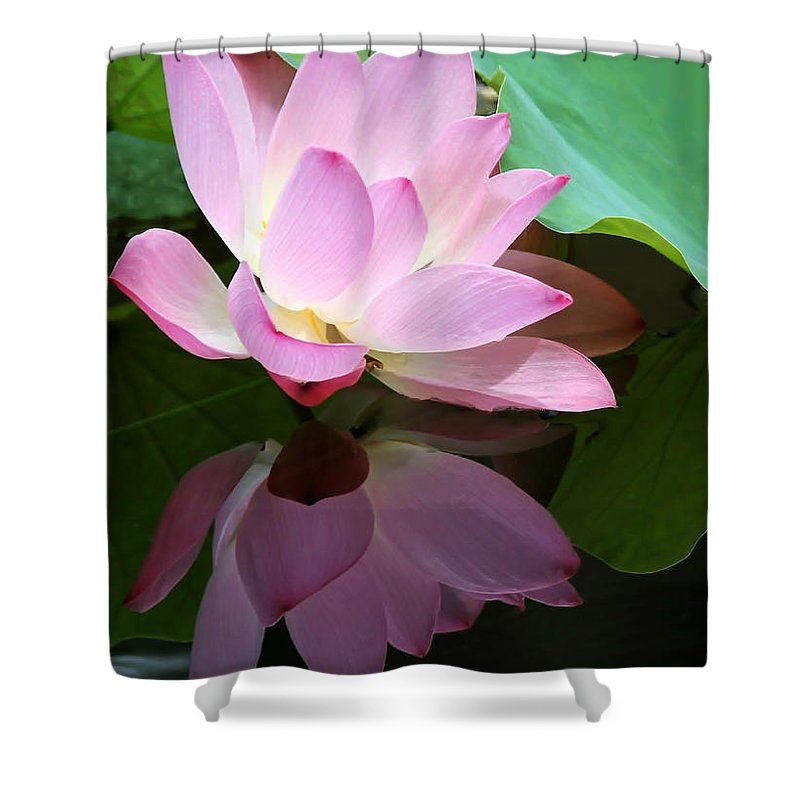 Landscape Shower Curtain featuring the photograph Pink Lotus Reflected In The Lake by Sabrina L Ryan