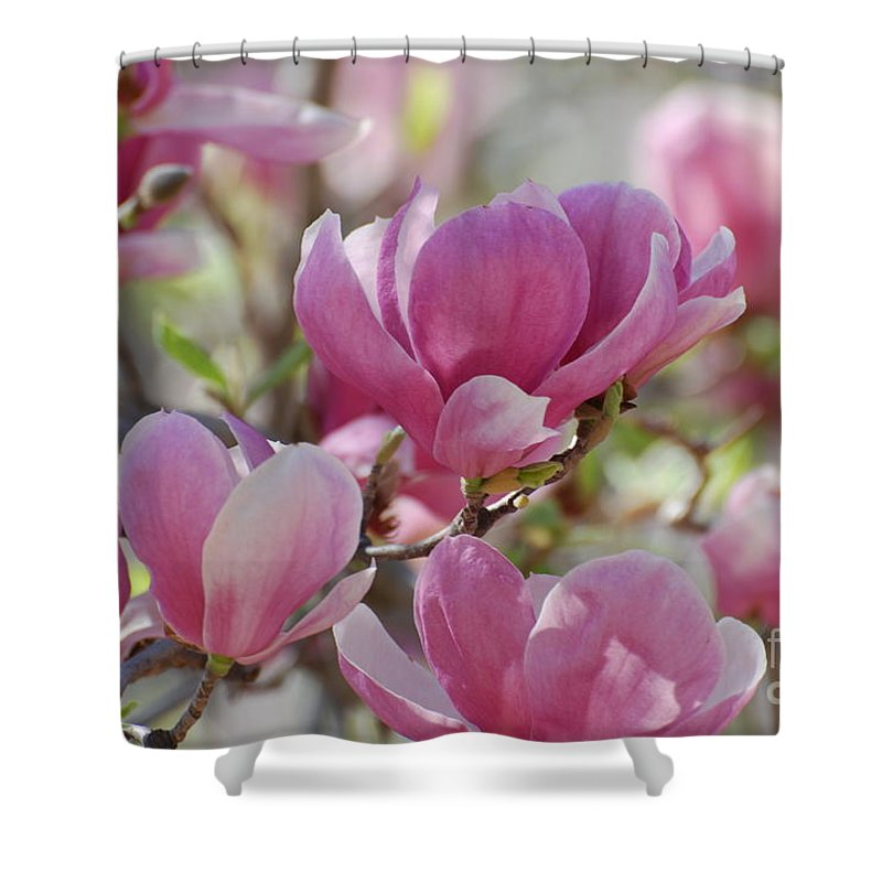 Magnolia Shower Curtain featuring the photograph Pink Magnoloias In Bloom by DejaVu Designs