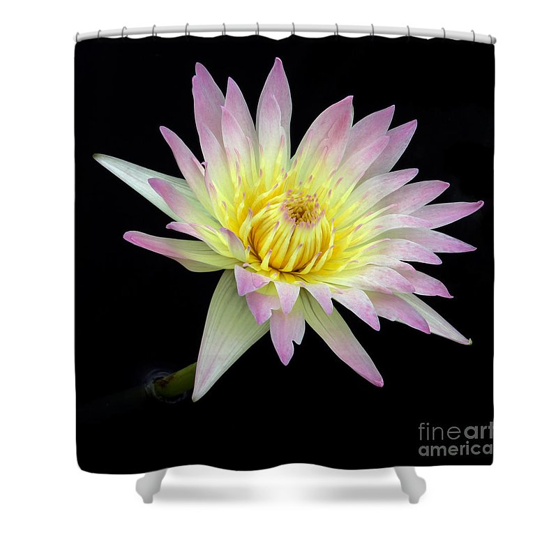 Landscape Shower Curtain featuring the photograph Pink N Yellow Water Lily Too by Sabrina L Ryan