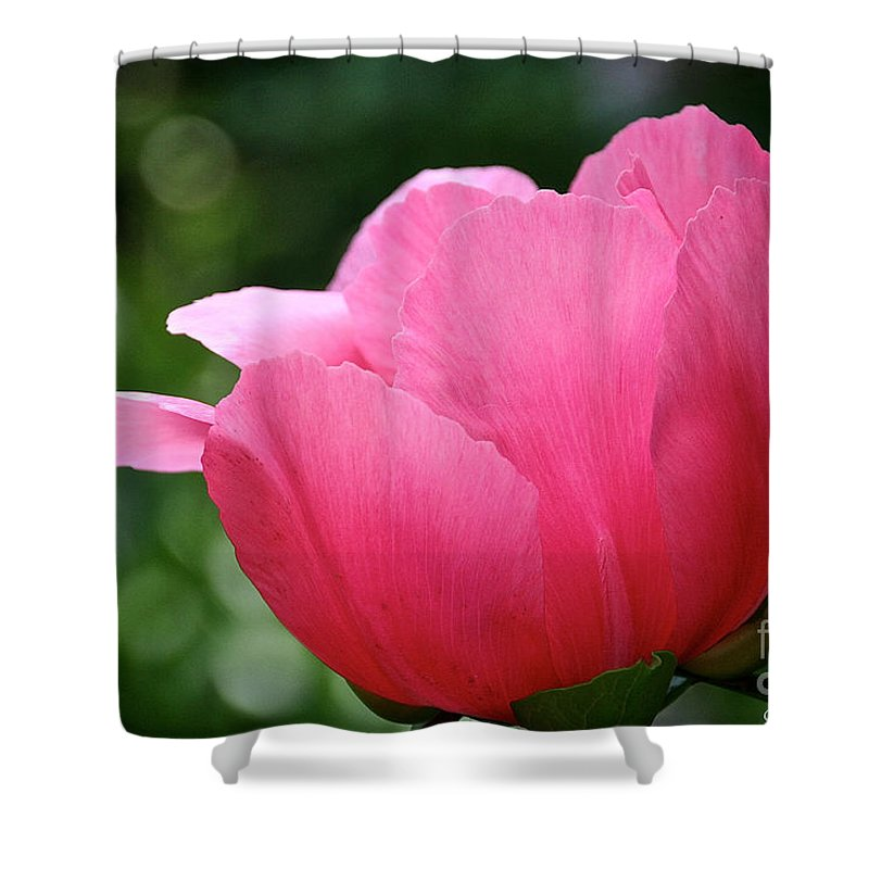 Flower Shower Curtain featuring the photograph Pink Petals Green Diamonds by Susan Herber