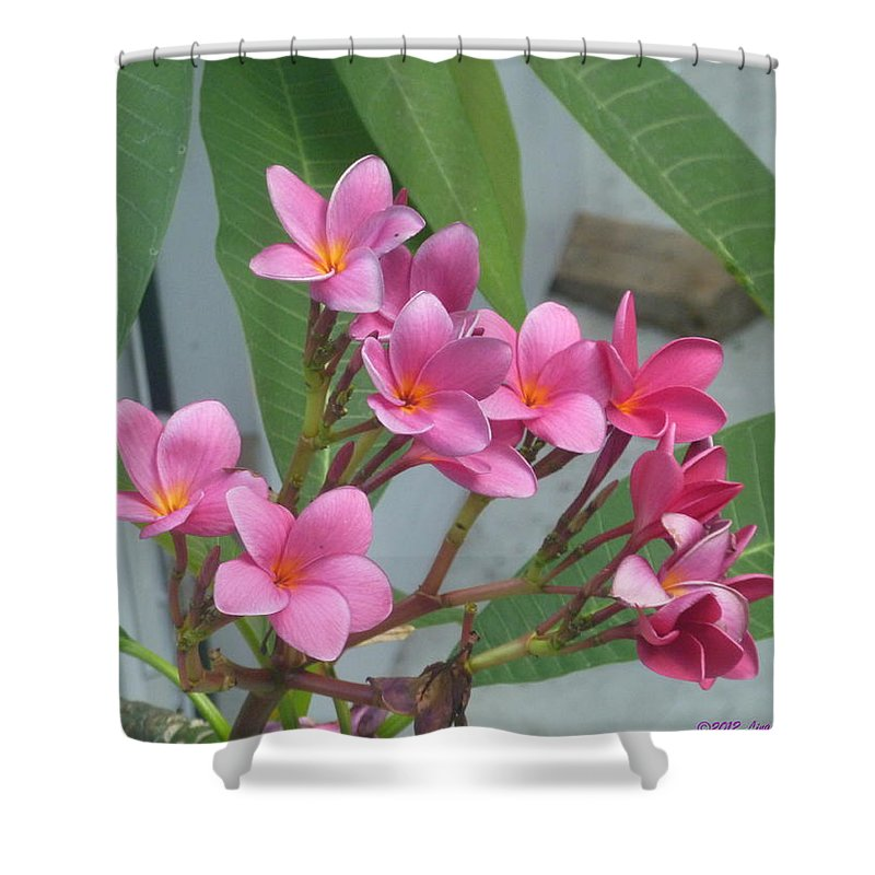 Flowers From The Tropics Shower Curtain featuring the photograph Pink Plumeria by Lingfai Leung