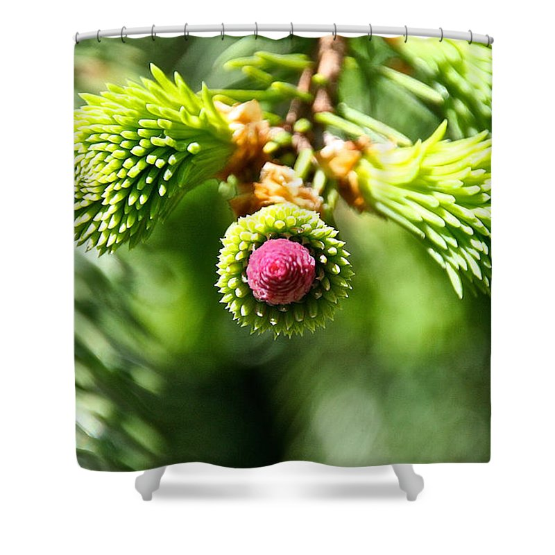 Tree Shower Curtain featuring the photograph Pink Point by Susan Herber