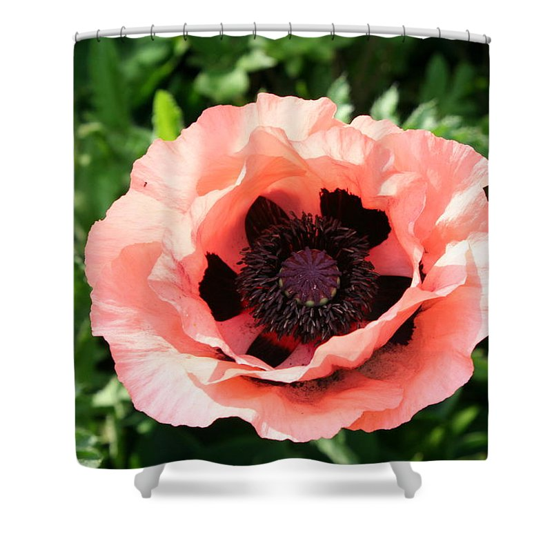Poppy Shower Curtain featuring the photograph Pink Poppy Bloom by Christiane Schulze Art And Photography