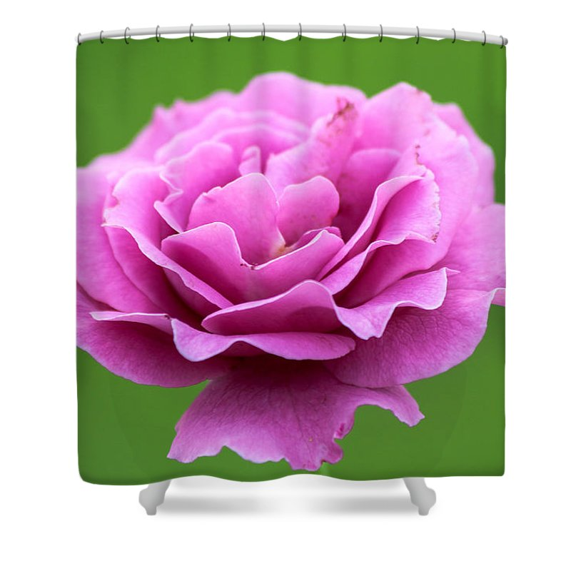 Rose Shower Curtain featuring the photograph Pink Rose by Gaurav Singh