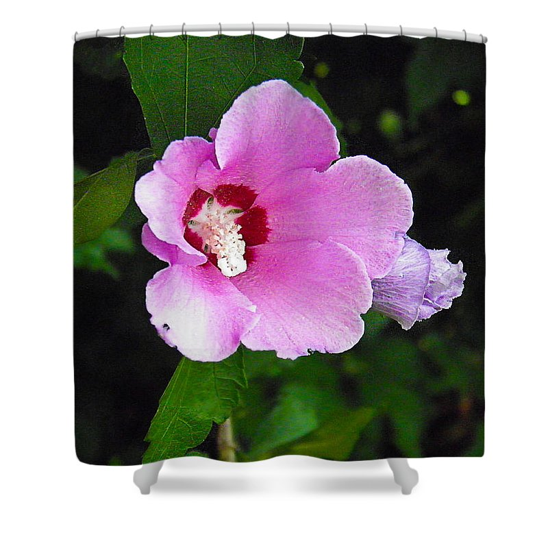 Rose Shower Curtain featuring the photograph Pink Rose Of Sharon 2 by Nick Kirby