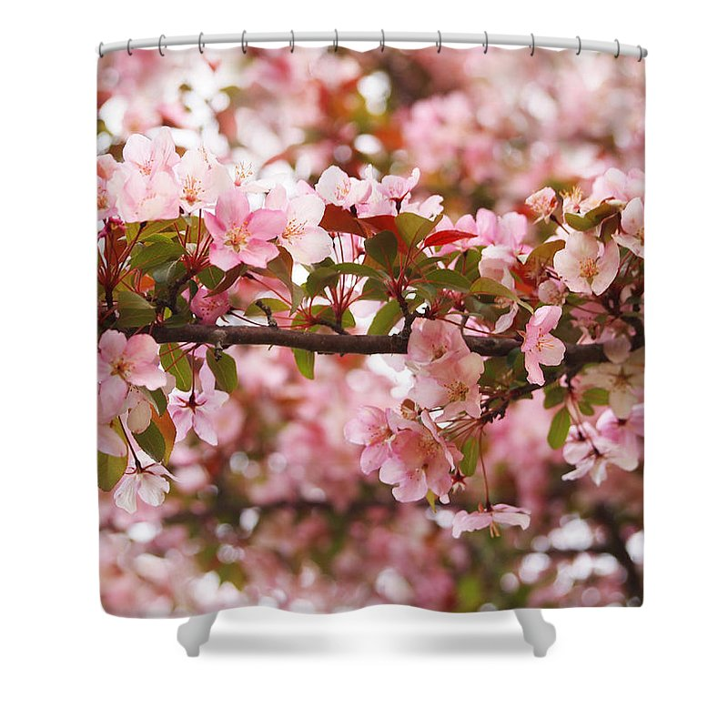 Apple Blossoms Shower Curtain featuring the photograph Pink Spring Apple Blossoms by Angie Rea
