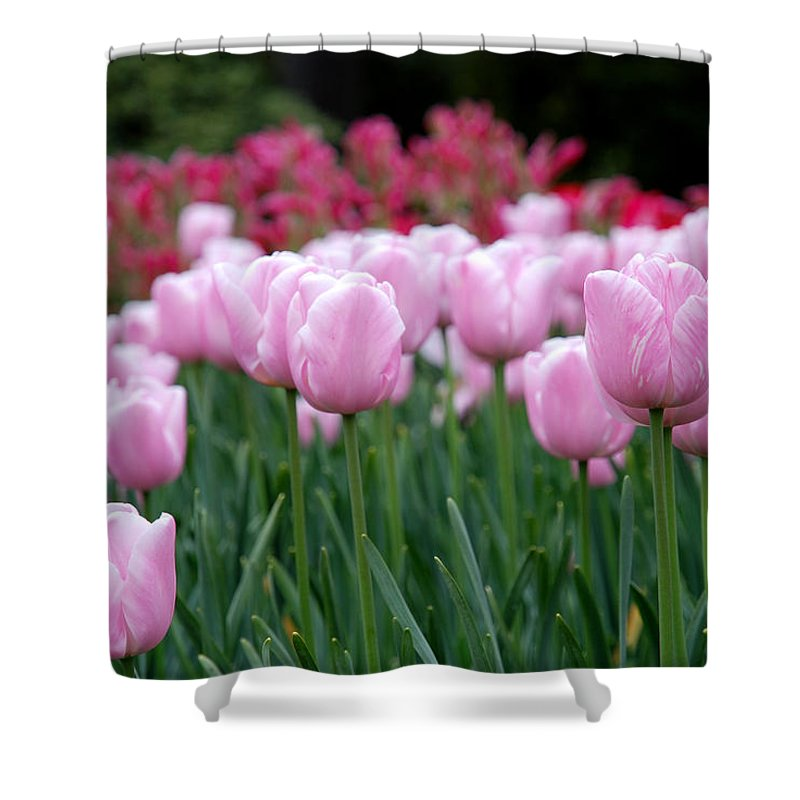 Tulip Shower Curtain featuring the photograph Pink Tulip Garden by Jennifer Ancker