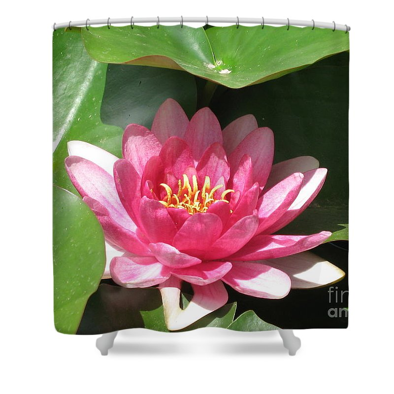 Waterlily Shower Curtain featuring the photograph Pink Waterlily by Christiane Schulze Art And Photography