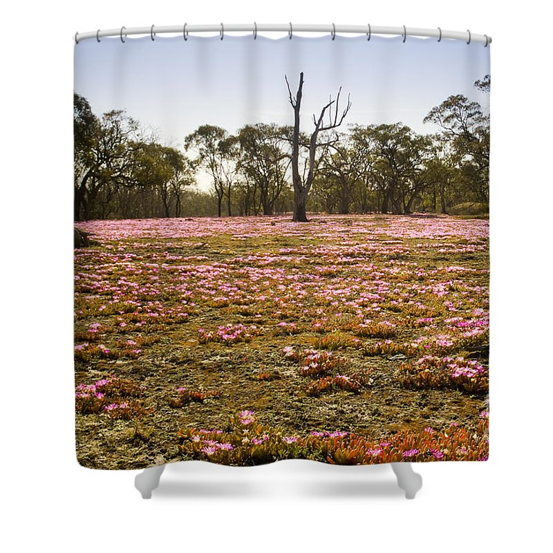 Flora Shower Curtain featuring the photograph Pink Wildflowers by Tim Hester