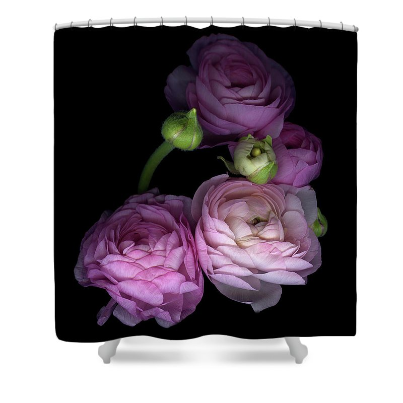 Bud Shower Curtain featuring the photograph Pinkalicius Ranunculus... Pink For by Photograph By Magda Indigo