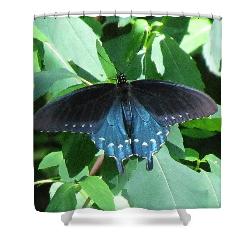 Pipevine Swallowtail Shower Curtain featuring the photograph Pipevine Swallowtail by Eric Noa