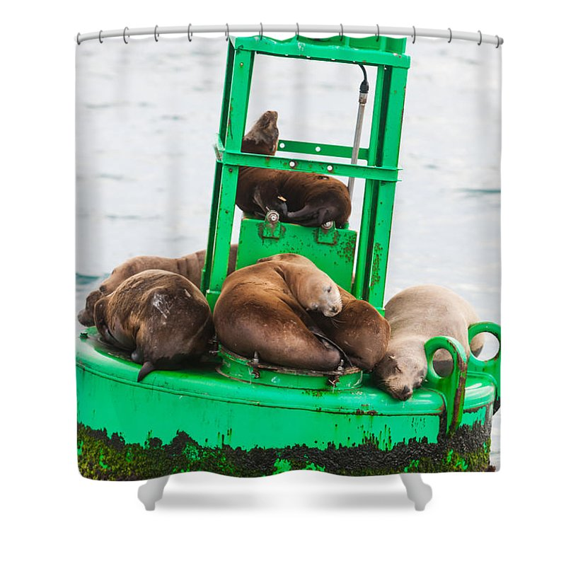 Seal Shower Curtain featuring the photograph Pit Stop by Scott Campbell