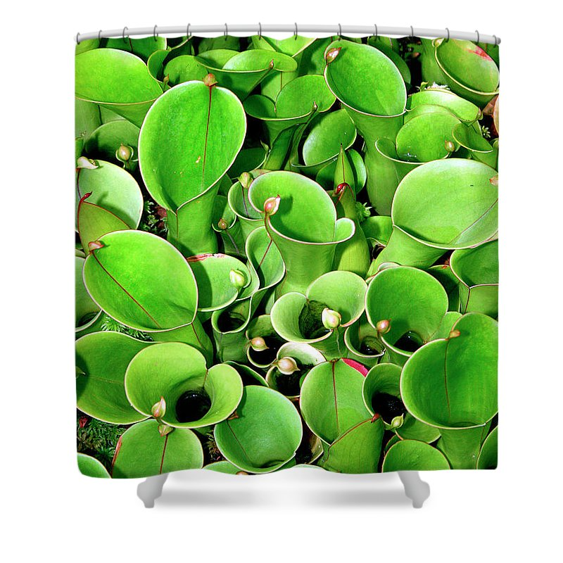 Plant Shower Curtain featuring the photograph Pitcher Plants Palm Springs by William Dey