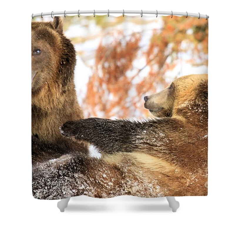 Grizzly Bear Shower Curtain featuring the photograph Playing Around by Adam Jewell