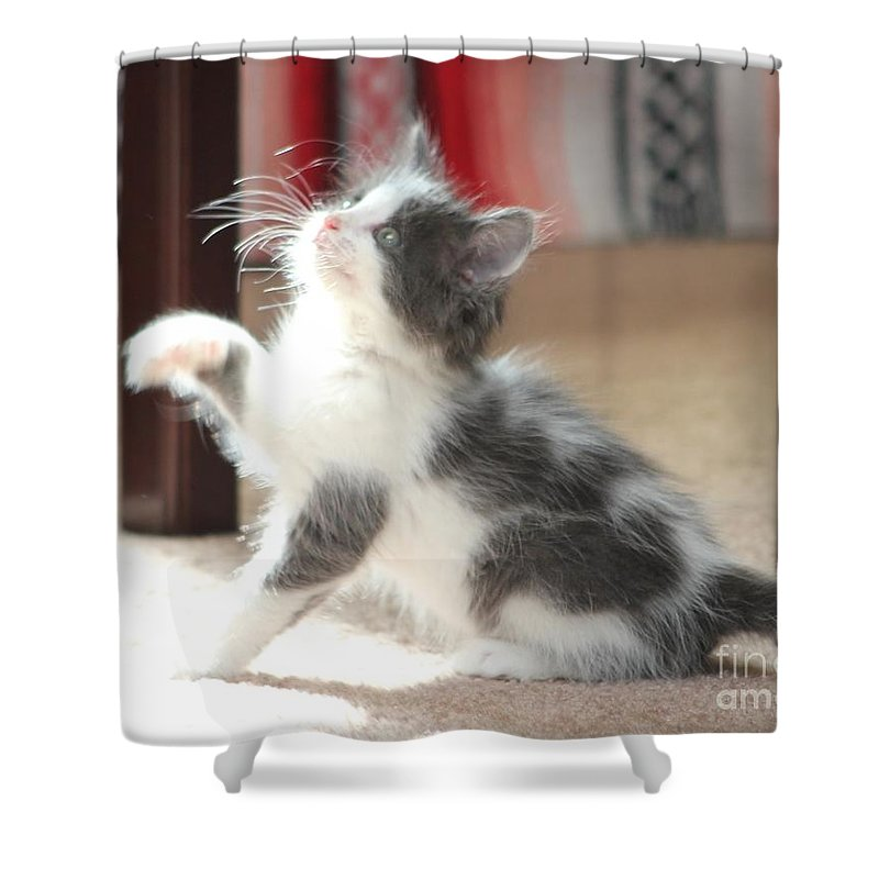 Kitten Shower Curtain featuring the photograph Playing Kitten by Michelle Powell