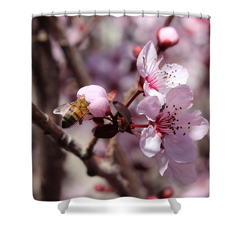 Floral Shower Curtain featuring the photograph Plum Blossoms 12 by Kume Bryant
